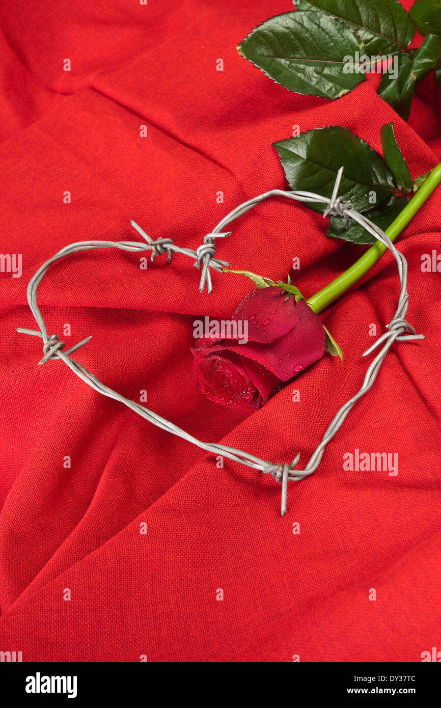 Barbed wire heart-shaped and rose on red background Stock Photo