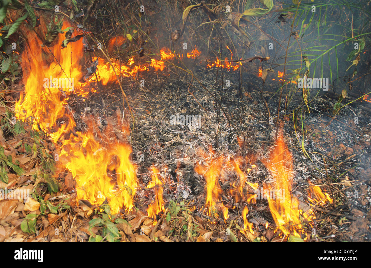 Forest Fires During The Dry Season Amazon Rainforest Brazil