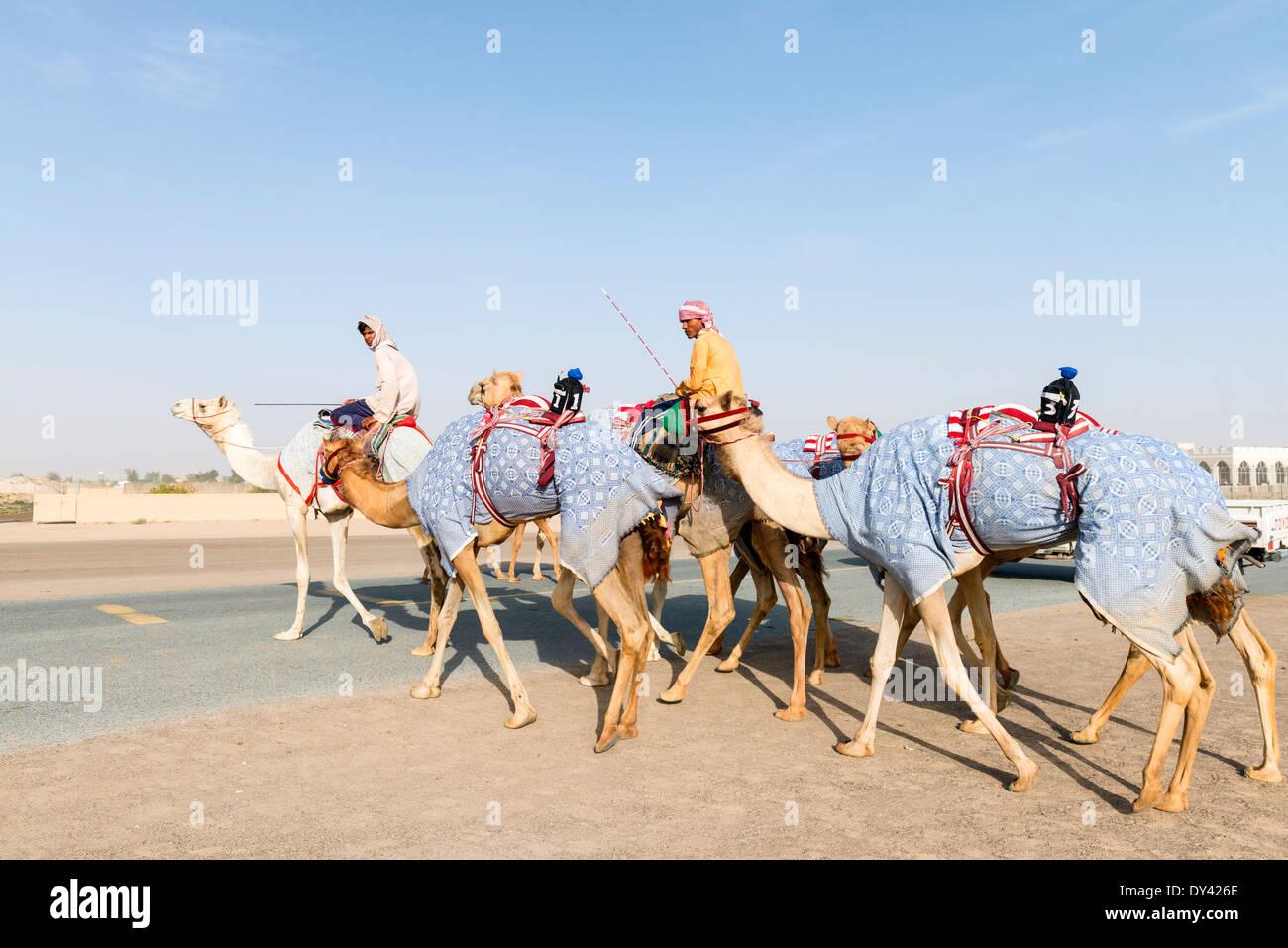 Camel racing festival at Al Marmoum camel racing racetrack in Dubai United Arab Emirates - Stock Image