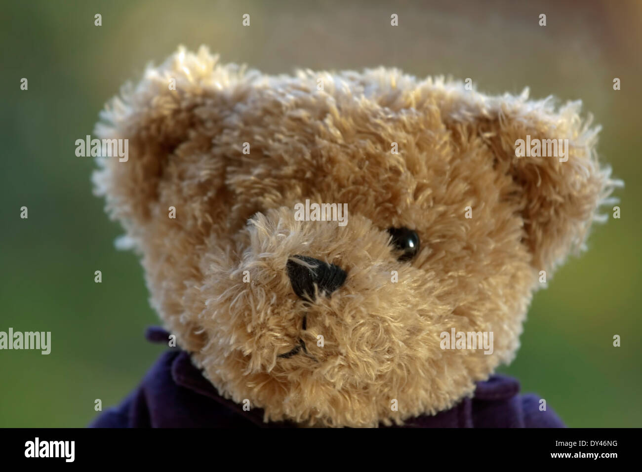 Portrait of a cuddly teddy bear against an unfocused background. - Stock Image