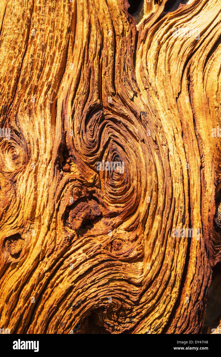 old weathered wood from a pine tree trunk - Stock Image
