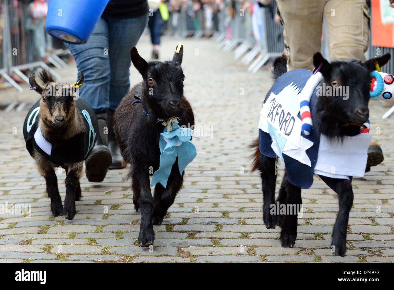 London, UK. 06th Apr, 2014. The Oxford and Cambridge 'Goat Race' at Spitalfields City Farm in London. Neither Oxford nor Cambridge won the race, with Herman (the goat with the black bib with a white & ampersand on it) taking top honours. Credit:  See Li/Alamy Live News - Stock Image