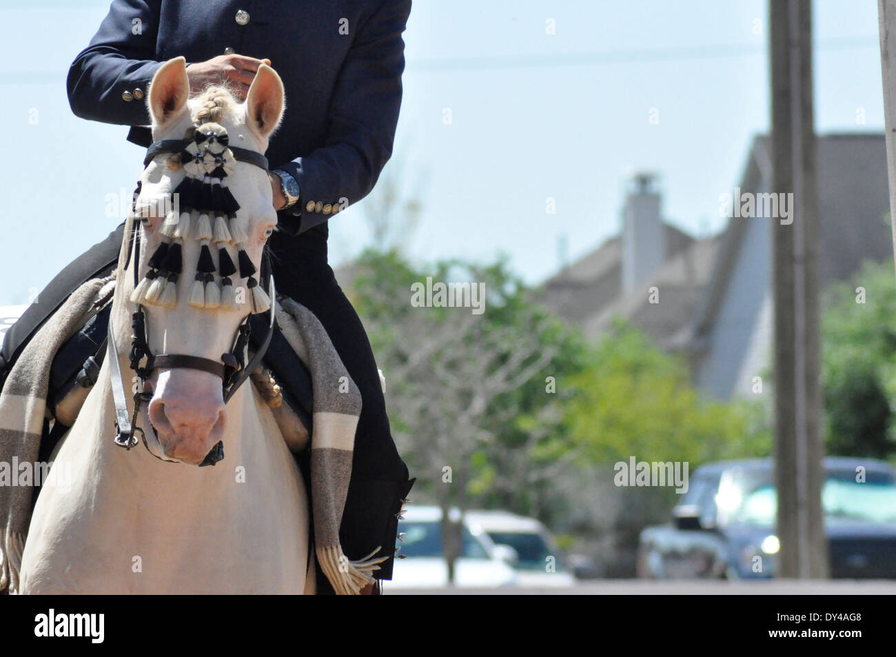 Lusitano horse headshot in headgear with rider at canter with houses in background - Stock Image