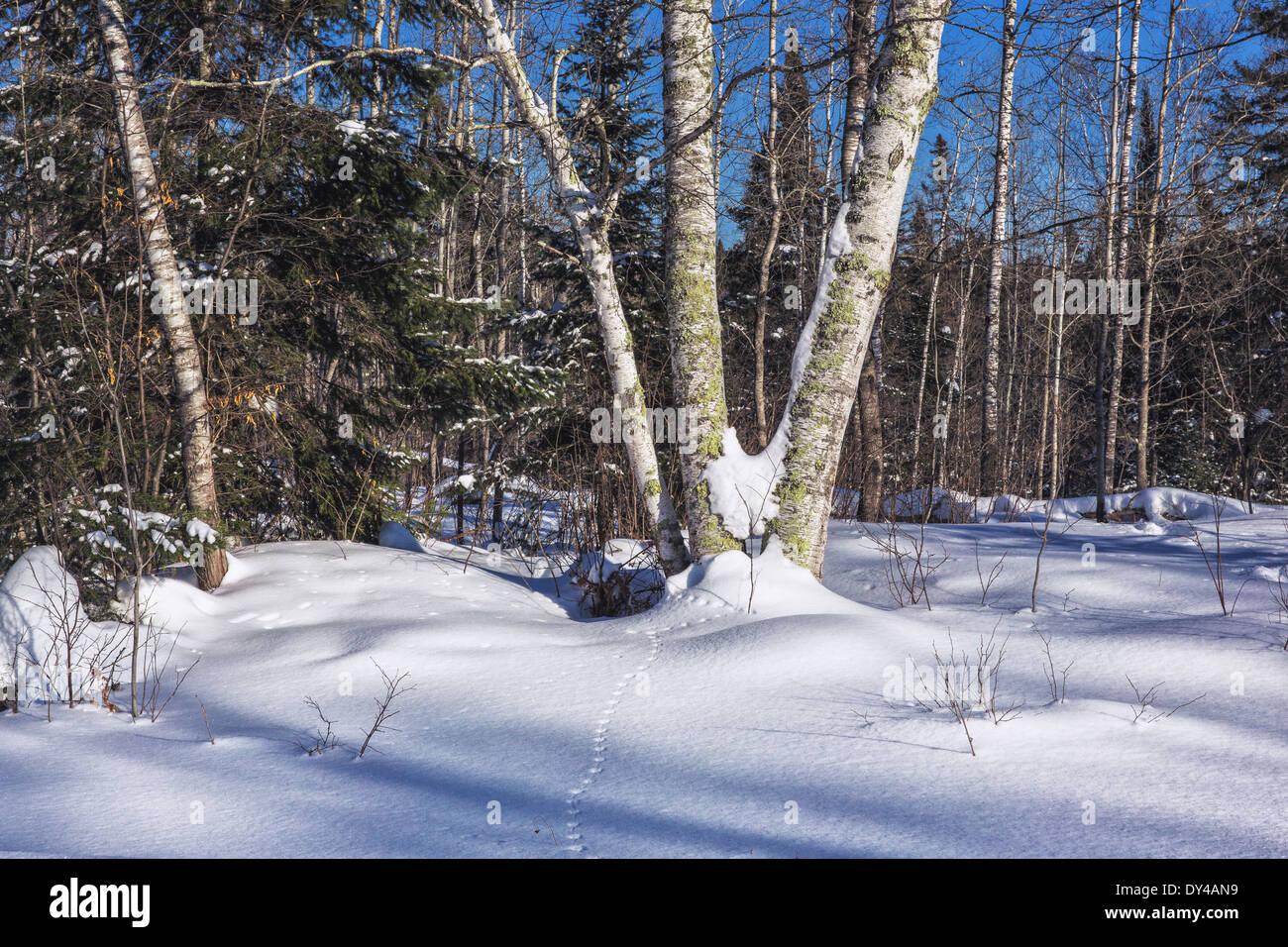 Animal tracks in the snow Stock Photo