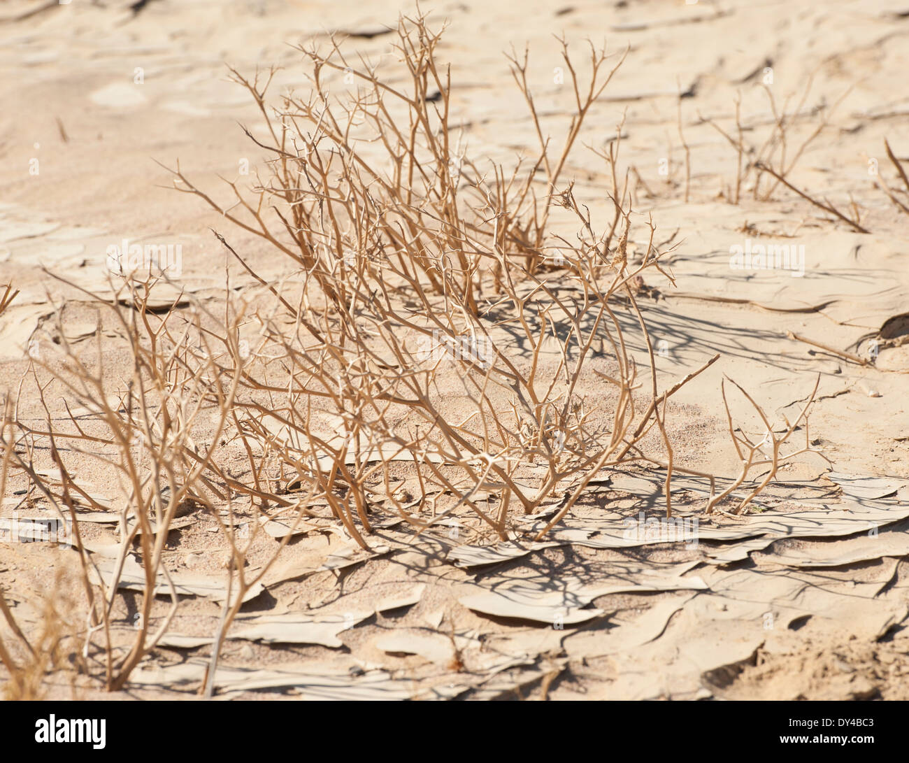 Dried plants in an arid dry desert environment - Stock Image