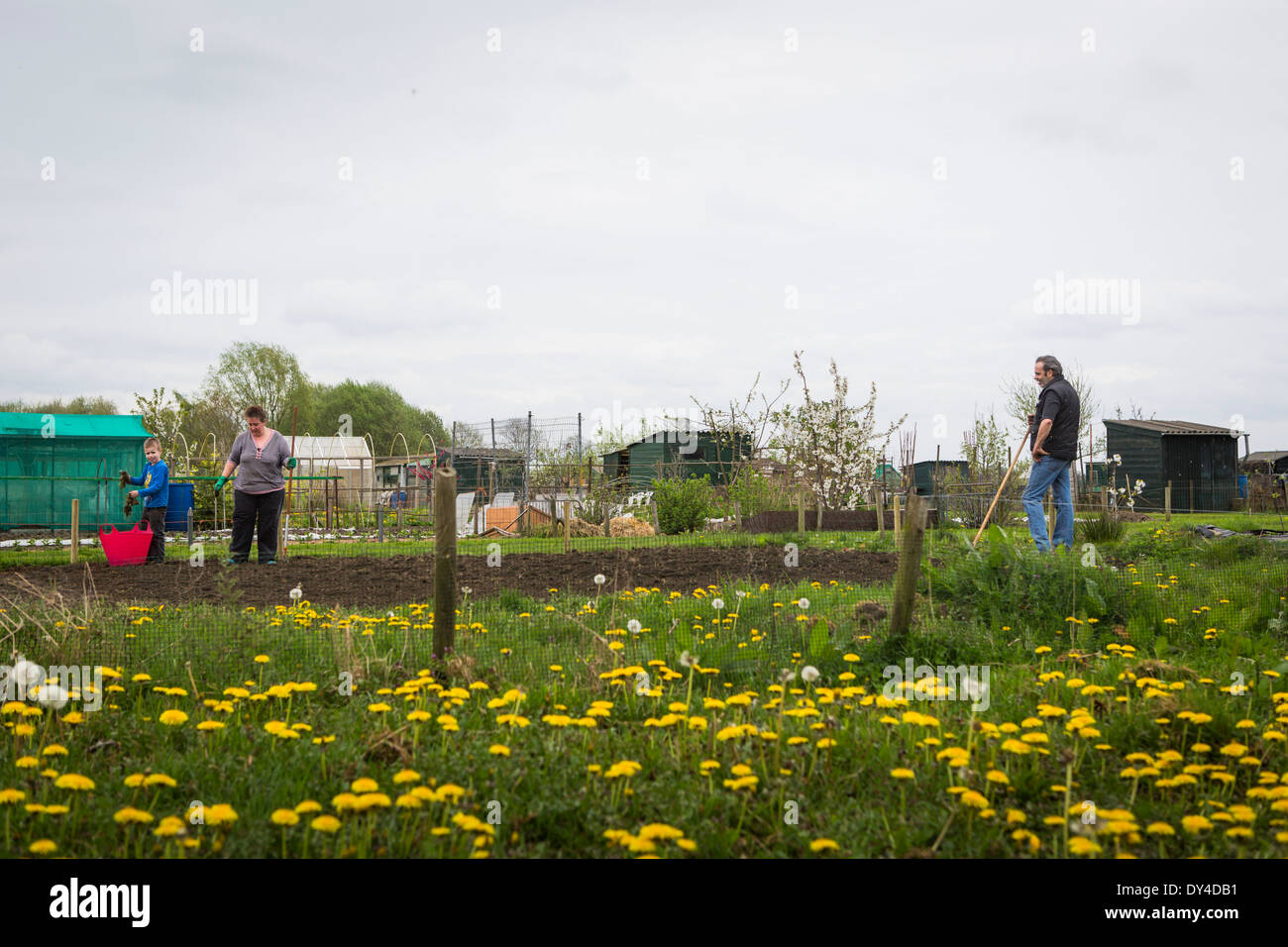 Family gardening in spring in their allotment garden - Stock Image