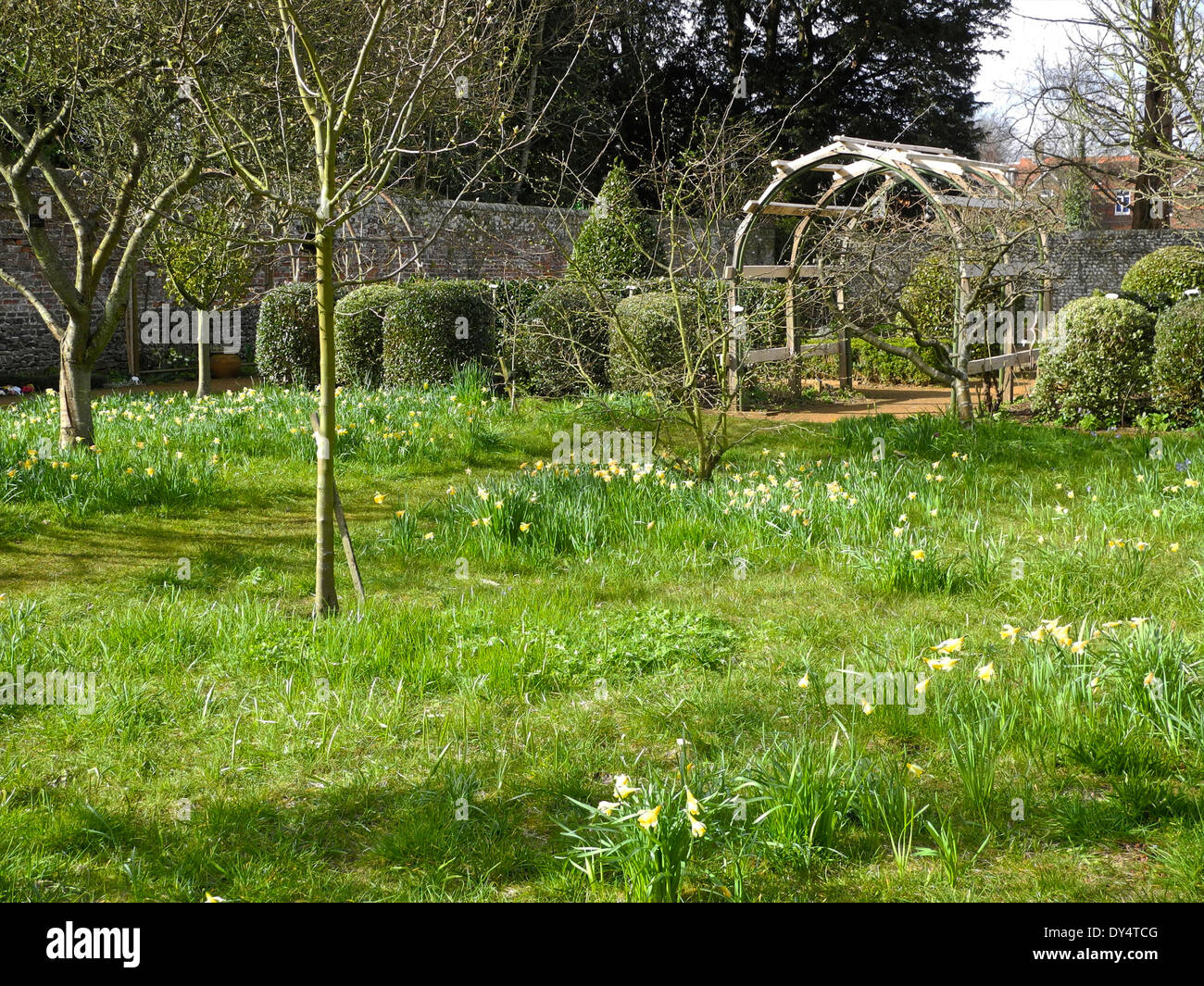 Petersfield Physic Gardens Garden in Petersfield, Hampshire contains a large collection of culinary and medicinal herb and plants. - Stock Image