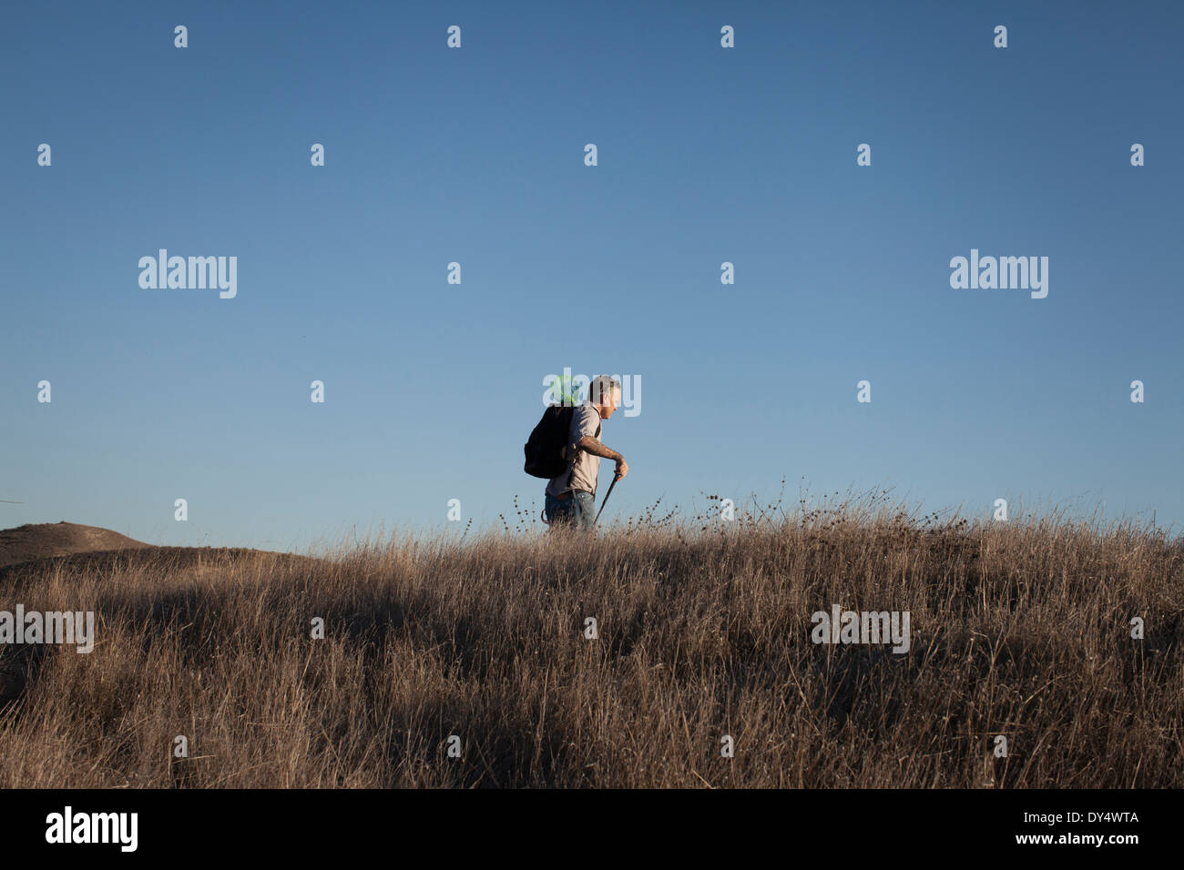 Distant view of mature man hiking in hills and long grass - Stock Image