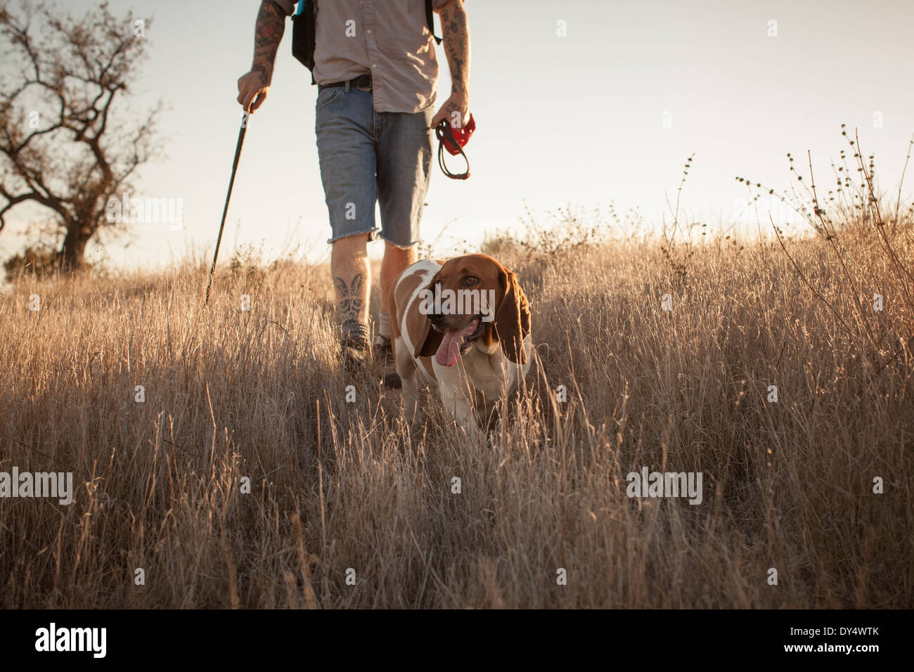 Cropped shot of mature man and his basset hound hiking in Santa Monica Mountains, California, USA - Stock Image