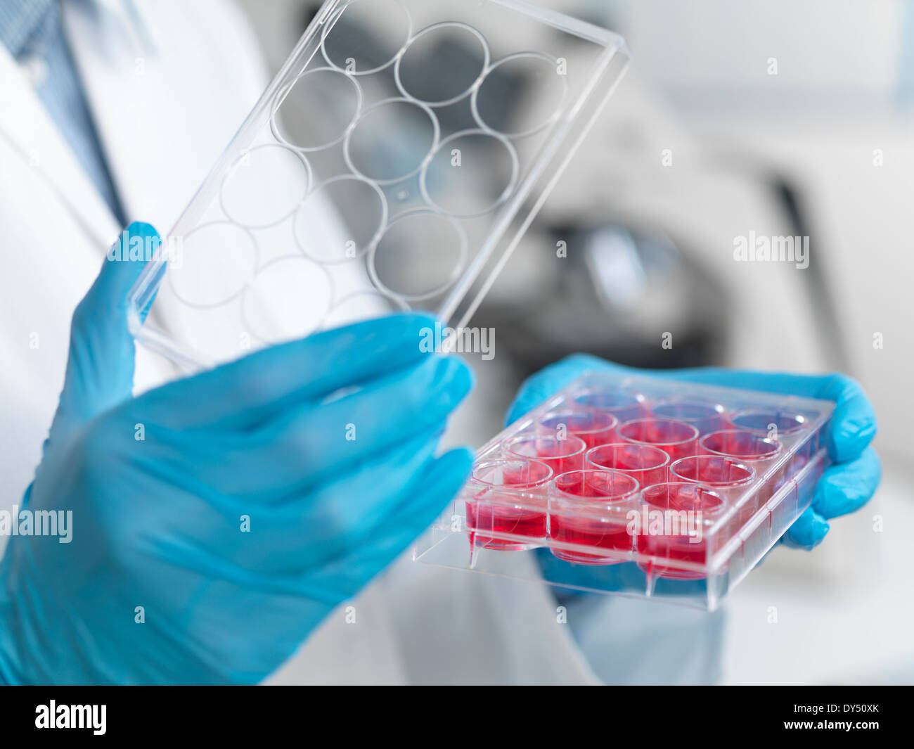 Stem cell research. Close up of female scientist examining cell cultures in multiwell tray - Stock Image