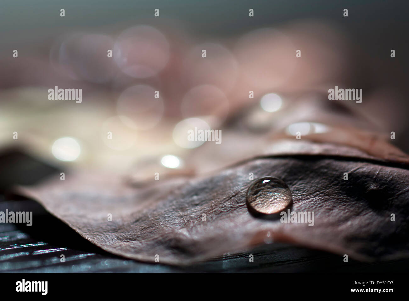 water droplet on autumn leaf - Stock Image