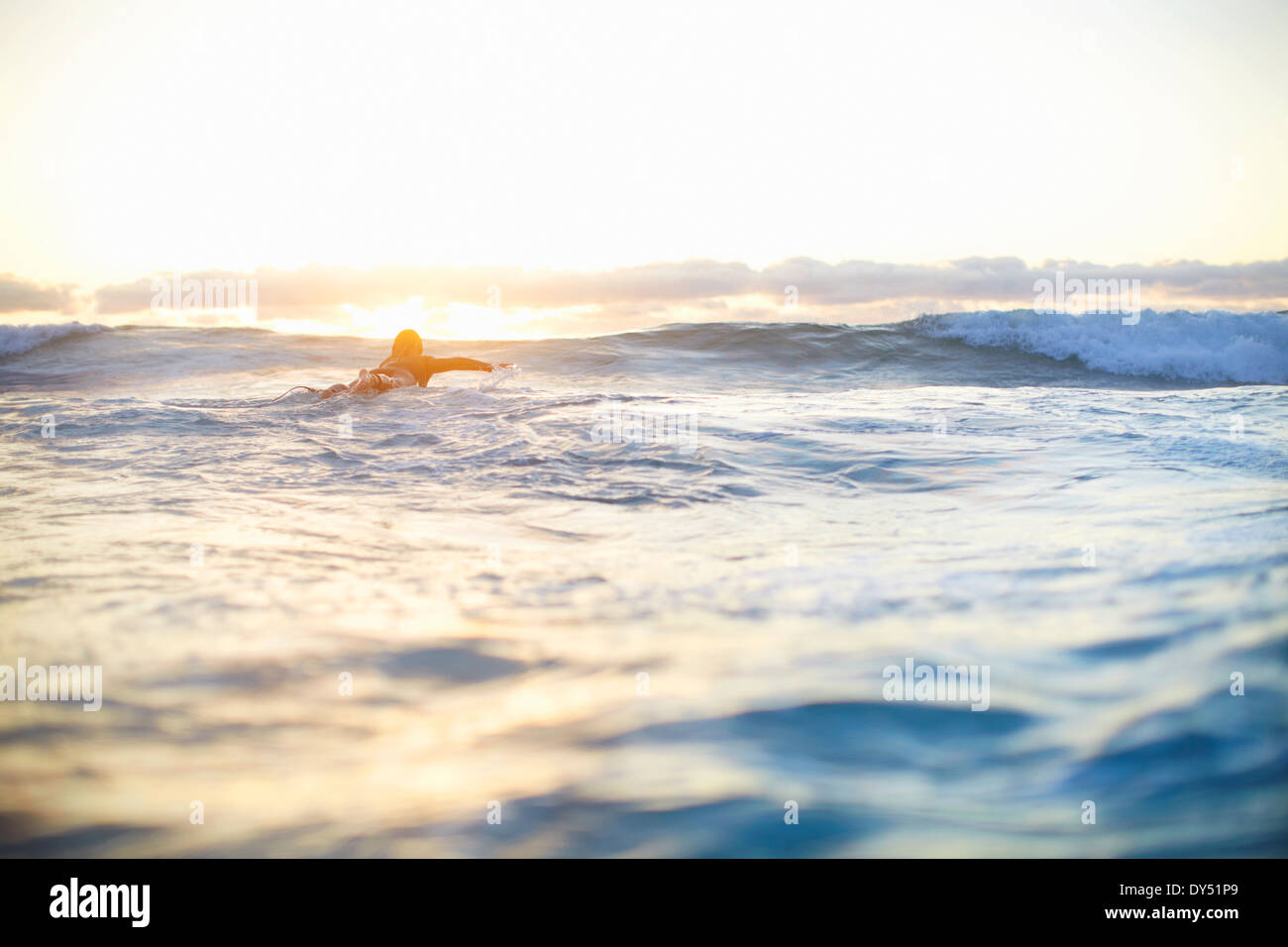 Female surfer swimming out to waves on surfboard, Sydney, Australia - Stock Image