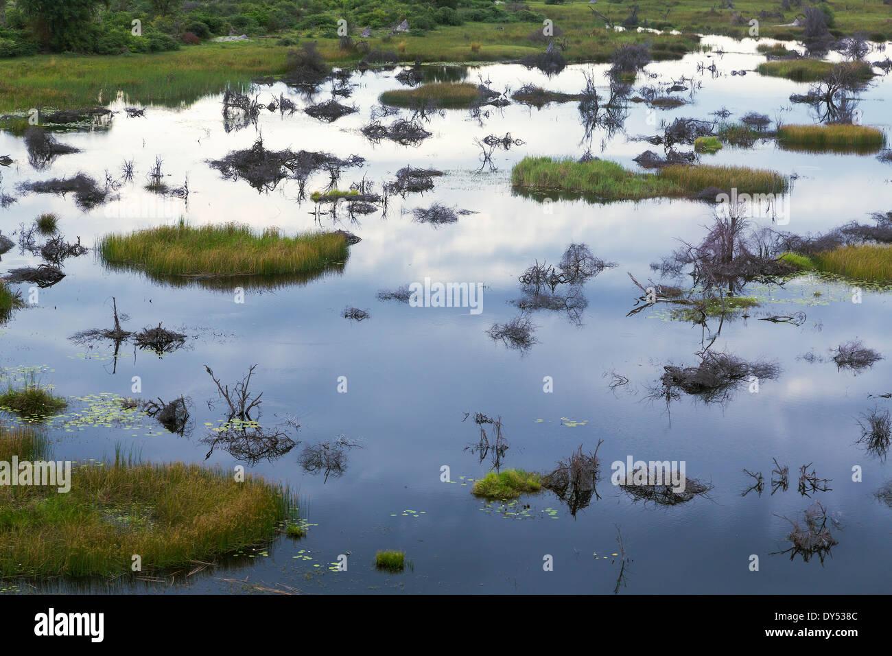 Okavango Delta, Chobe National Park, Botswana, Africa - Stock Image