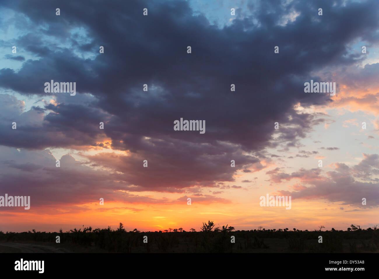 Silhouetted landscape at sunset, Kasane, Chobe National Park, Botswana, Africa - Stock Image