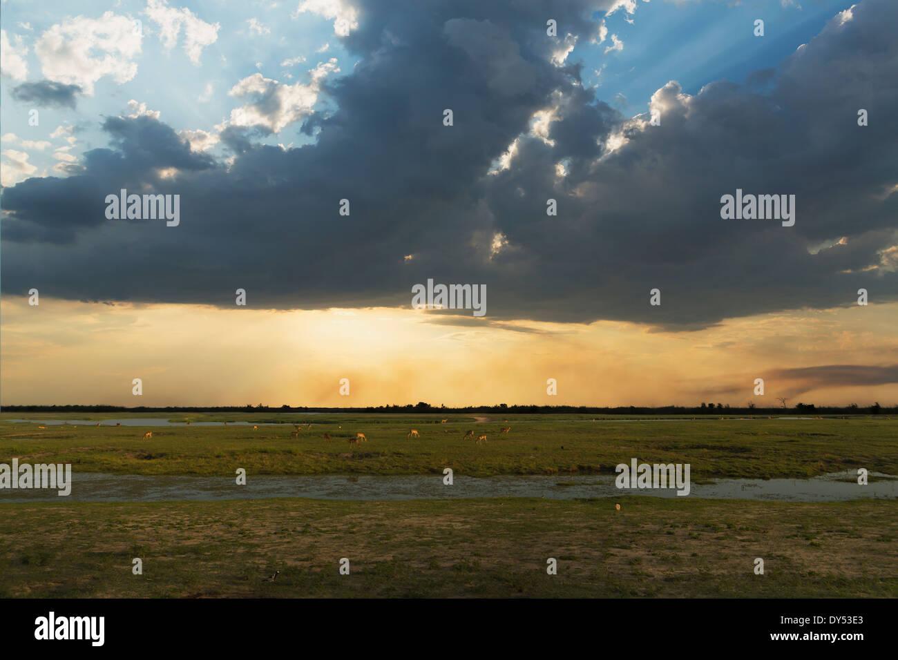 Swampland, Kasane, Chobe National Park, Botswana, Africa - Stock Image