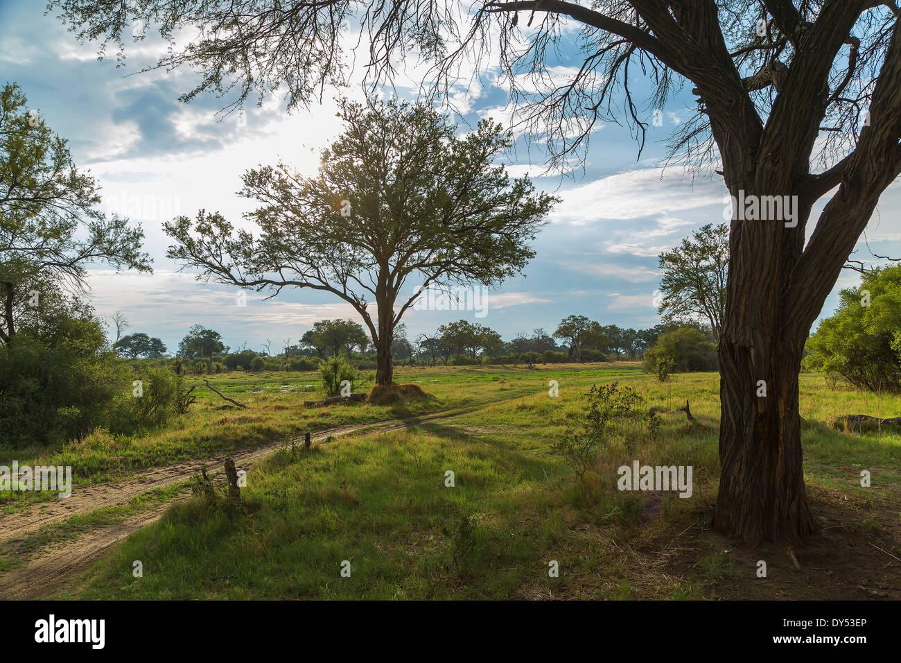 Trees and dirt track, Okavango Delta, Chobe National Park, Botswana, Africa - Stock Image