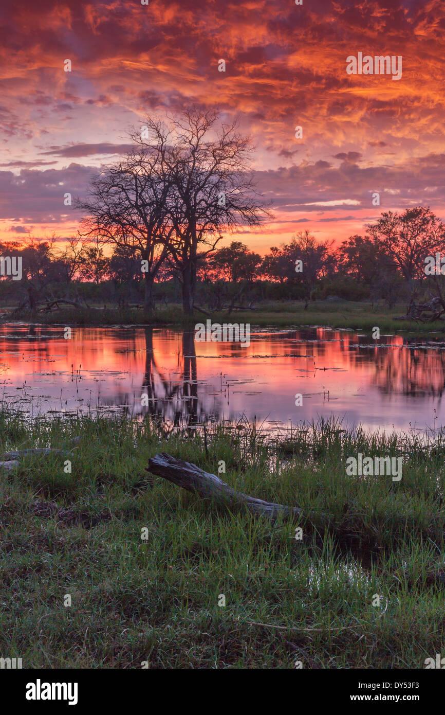 Swamp and trees at dusk, Okavango Delta, Chobe National Park, Botswana, Africa - Stock Image