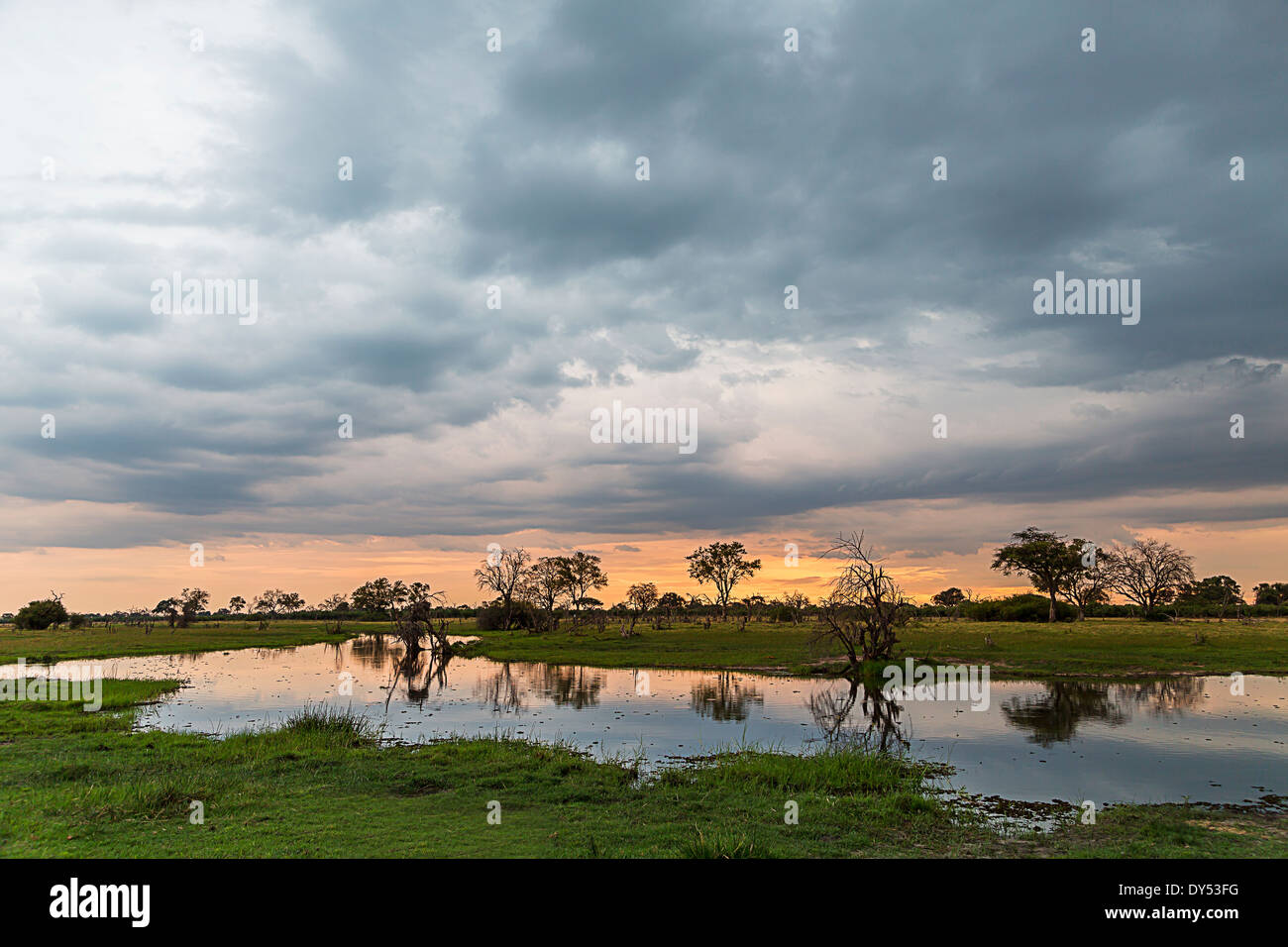 Silhouetted trees and swamp, Okavango Delta, Chobe National Park, Botswana, Africa - Stock Image