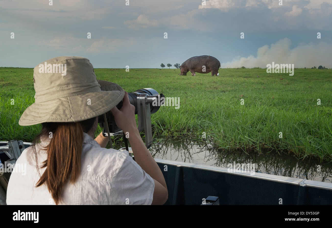 Woman photographing Hippopotamus from safari truck, Kasane, Chobe National Park, Botswana, Africa - Stock Image