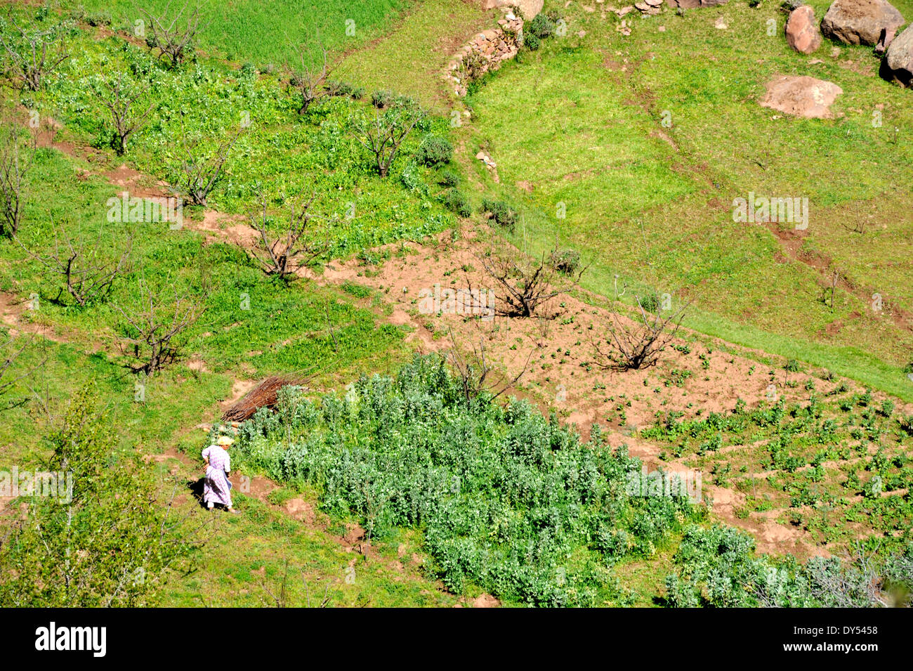 Looking down from above on woman working in garden near Tadmamt in Atlas mountains on road to Oukaimeden from Marrakech, Stock Photo