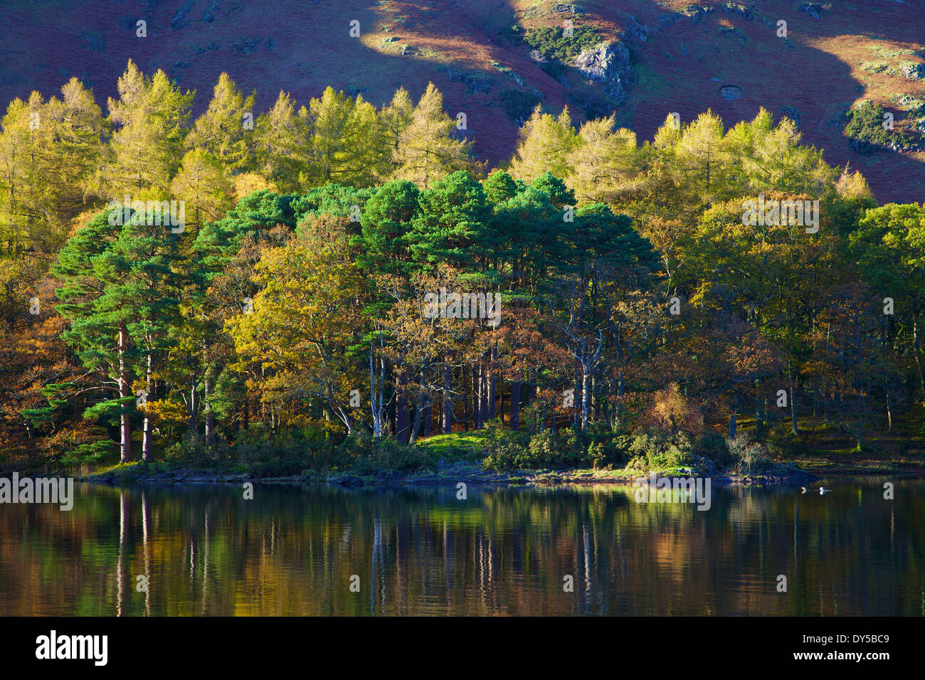 Autumn trees reflection in Derwent Water Borrowdale, English Lake District, Cumbria, North West England, United Kingdom. - Stock Image