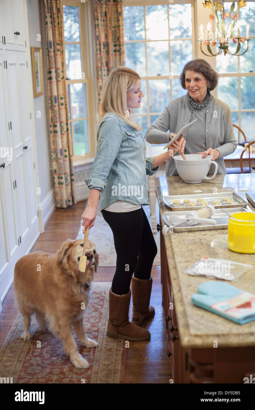 Young woman treating dog whist baking with grandmother - Stock Image