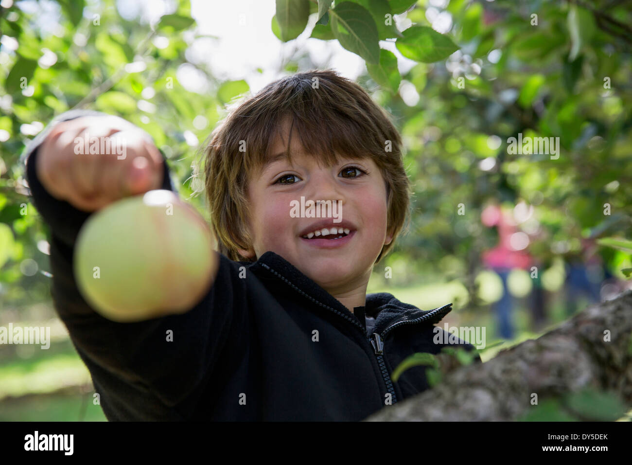 Portrait of a boy holding up freshly picked apple - Stock Image