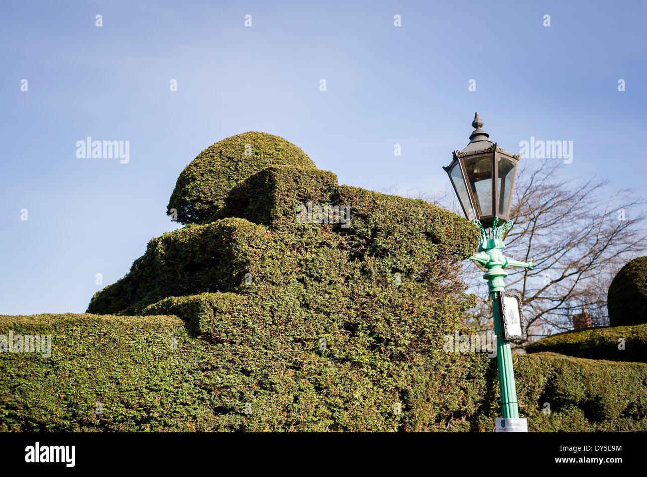 Topiary yew hedge in Stratford On Avon UK - Stock Image