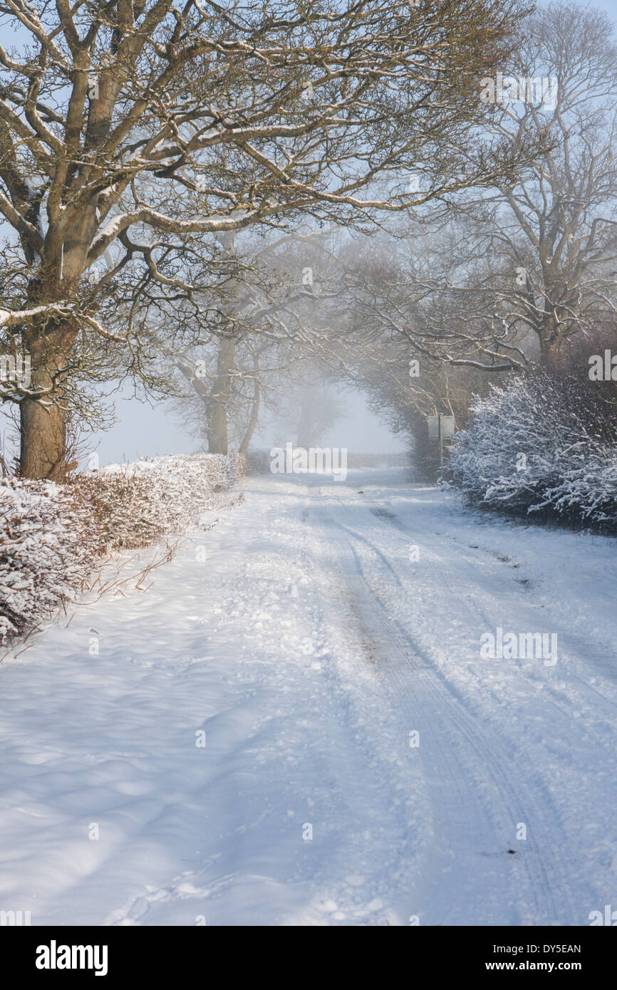 Snow covered wooded country lane which has been compacted and turned to ice. Melton Mowbray, Leicestershire, England UK - Stock Image