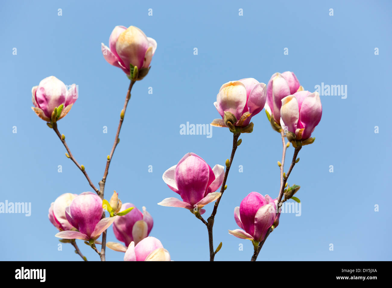 Spring time flowers against blue sky - Stock Image