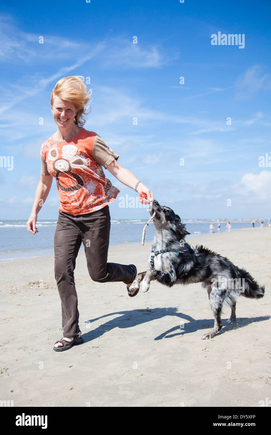 Woman playing with dog on beach, Zandvoort, North Holland, Netherlands - Stock Image