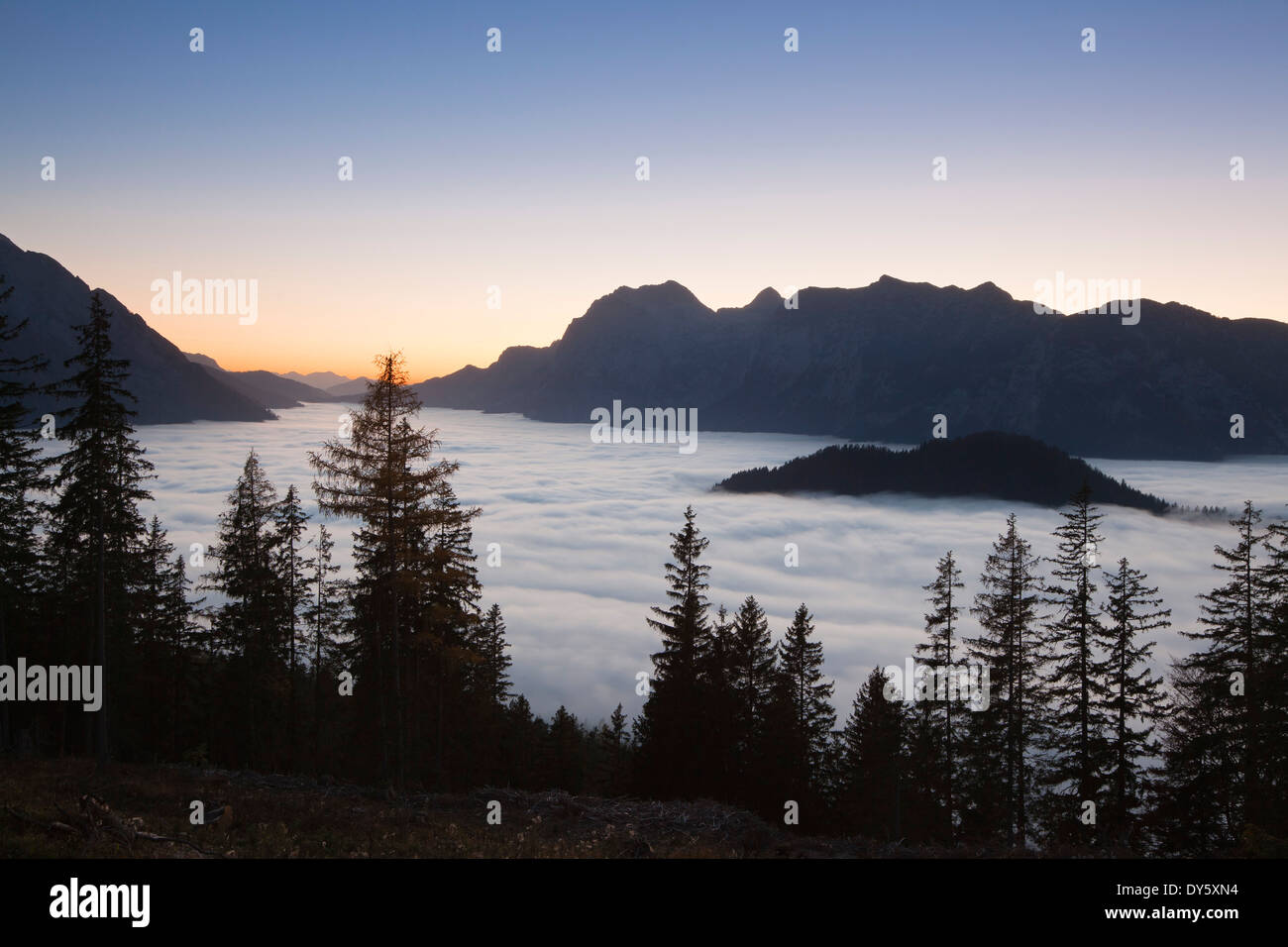 View over the fog in the valley onto Reiteralpe at dawn, Berchtesgaden region, Berchtesgaden National Park, Upper Bavaria, Germa - Stock Image