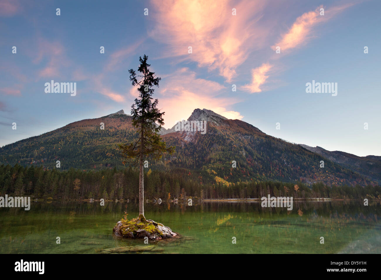 Spruce on a rock island at lake Hintersee in the evening light, view of Hochkalter, Ramsau, Berchtesgaden region, Berchtesgaden - Stock Image