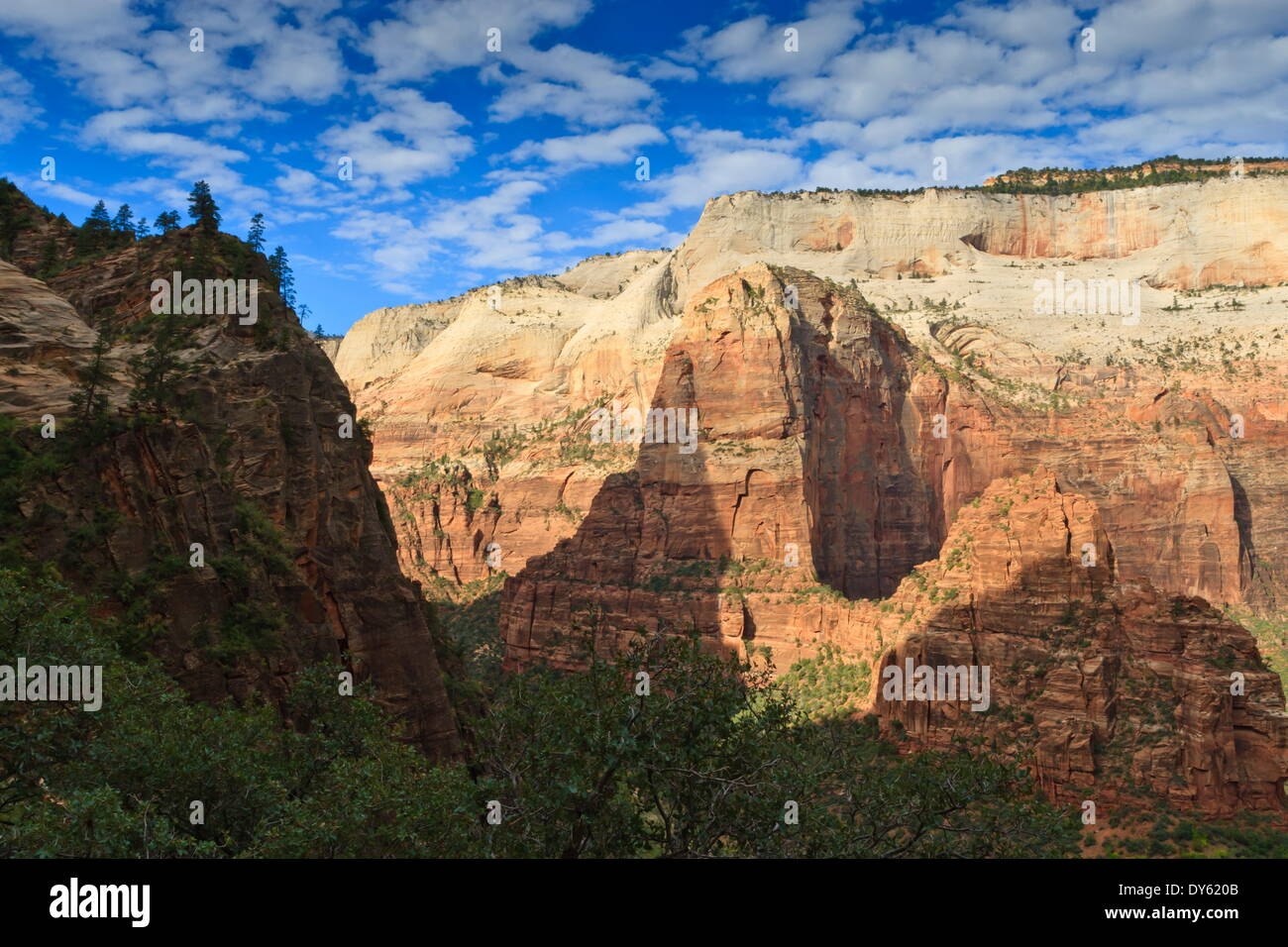 View into Zion Canyon from trail to Observation Point, Zion National Park, Utah, United States of America, North America - Stock Image