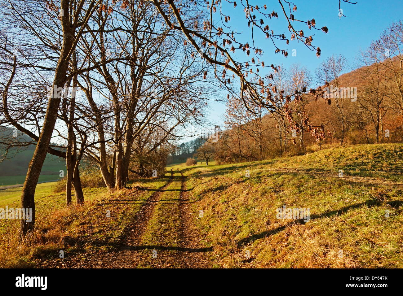 Country road, Swabian Alb, Baden-Wurttemberg, Germany, Europe - Stock Image