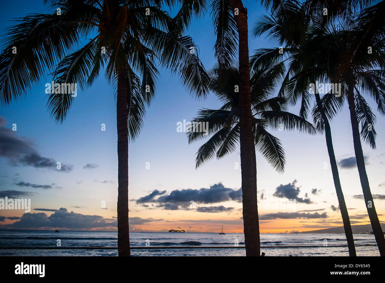 Palm trees on Waikiki Beach, Oahu, Hawaii, United States of America, Pacific - Stock Image