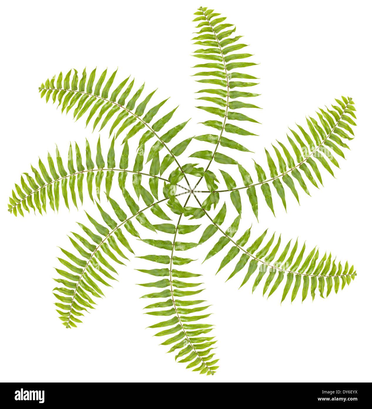 Propeller made of fern leaves on white background. - Stock Image