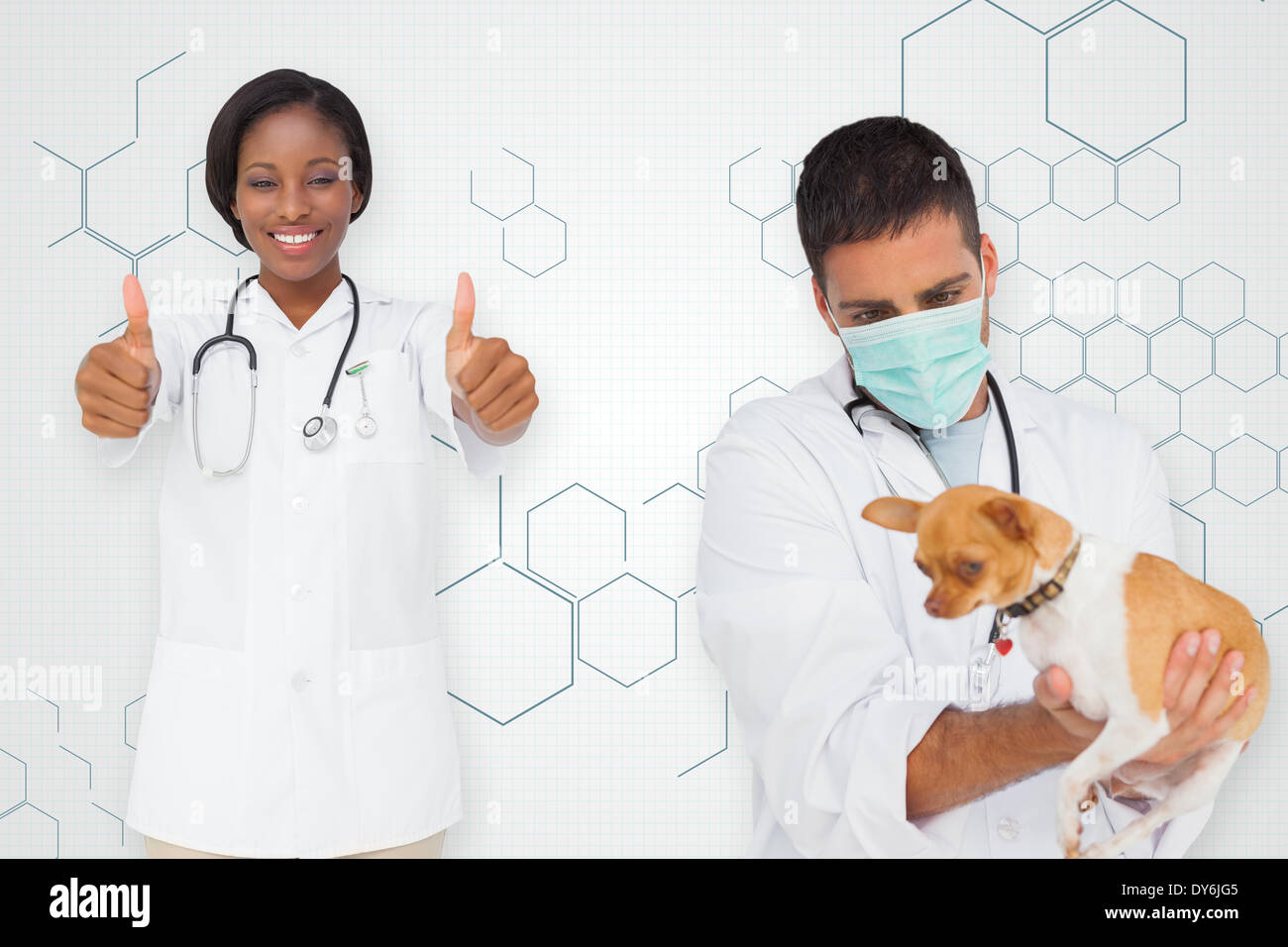 Composite image of vet holding chihuahua and nurse showing thumbs up Stock Photo