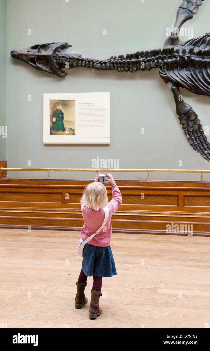 A young child taking a photo of dinosaur fossil bones, UK - Stock Image