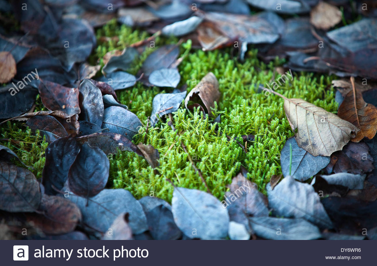 Moss and fallen tree leaves - Stock Image