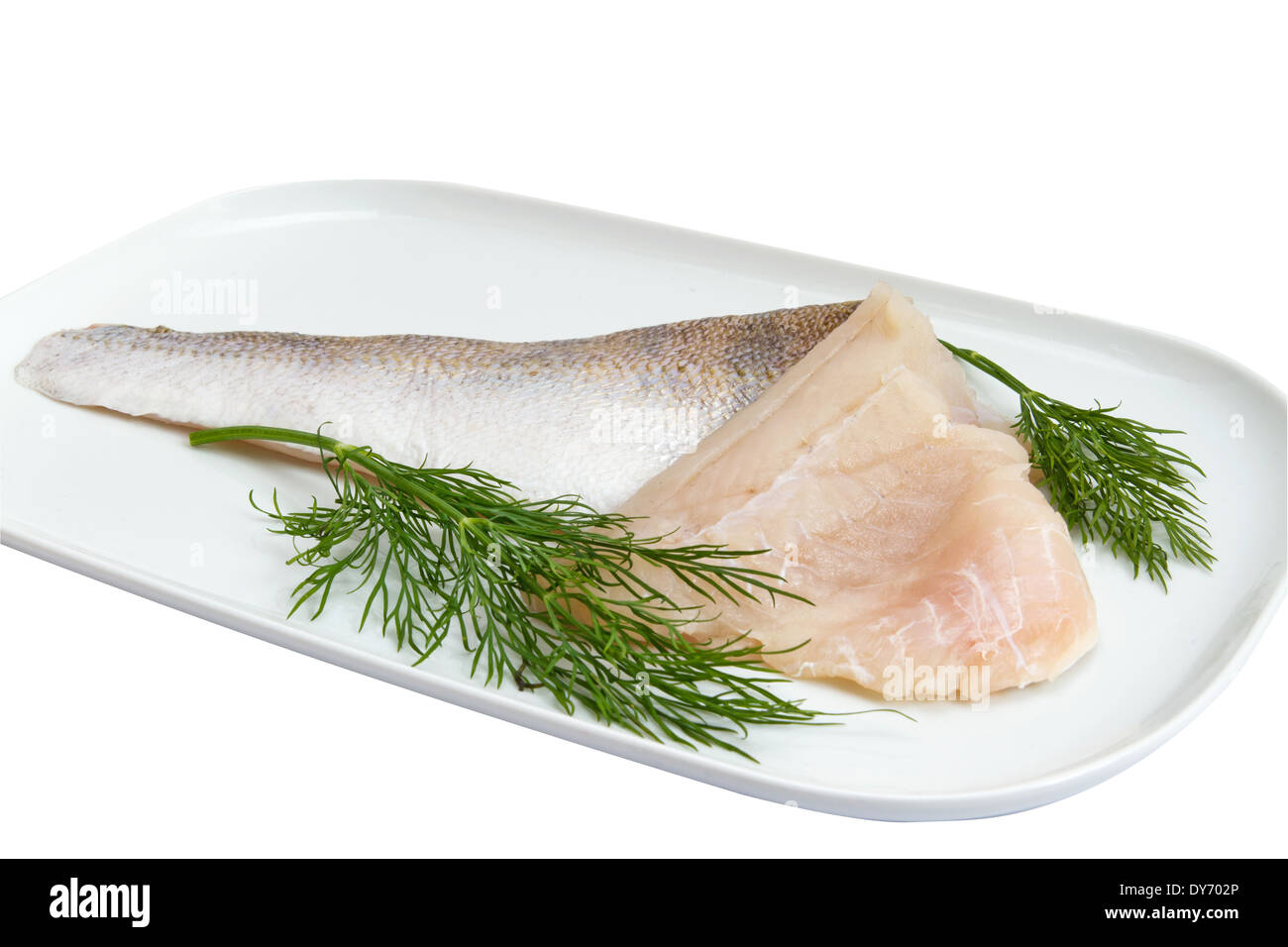 pikeperch on white - Stock Image