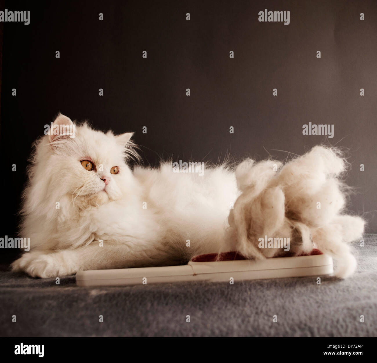 Cat hair - Stock Image