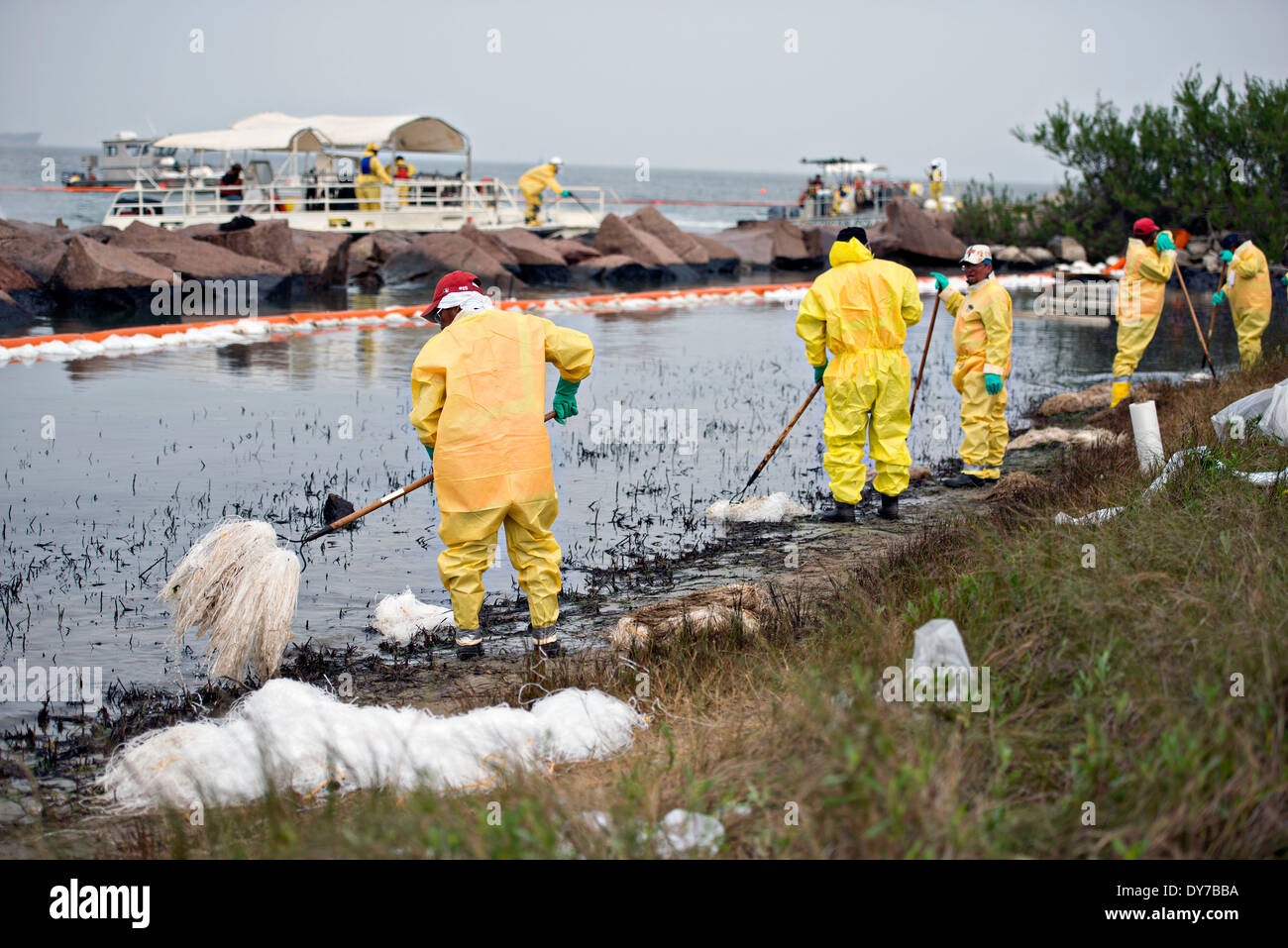 Responders work to clean up oil with absorbent pom-poms and rakes in one of the worst-hit areas from an oil spill April 3, 2014 on Galveston Island, Texas. - Stock Image