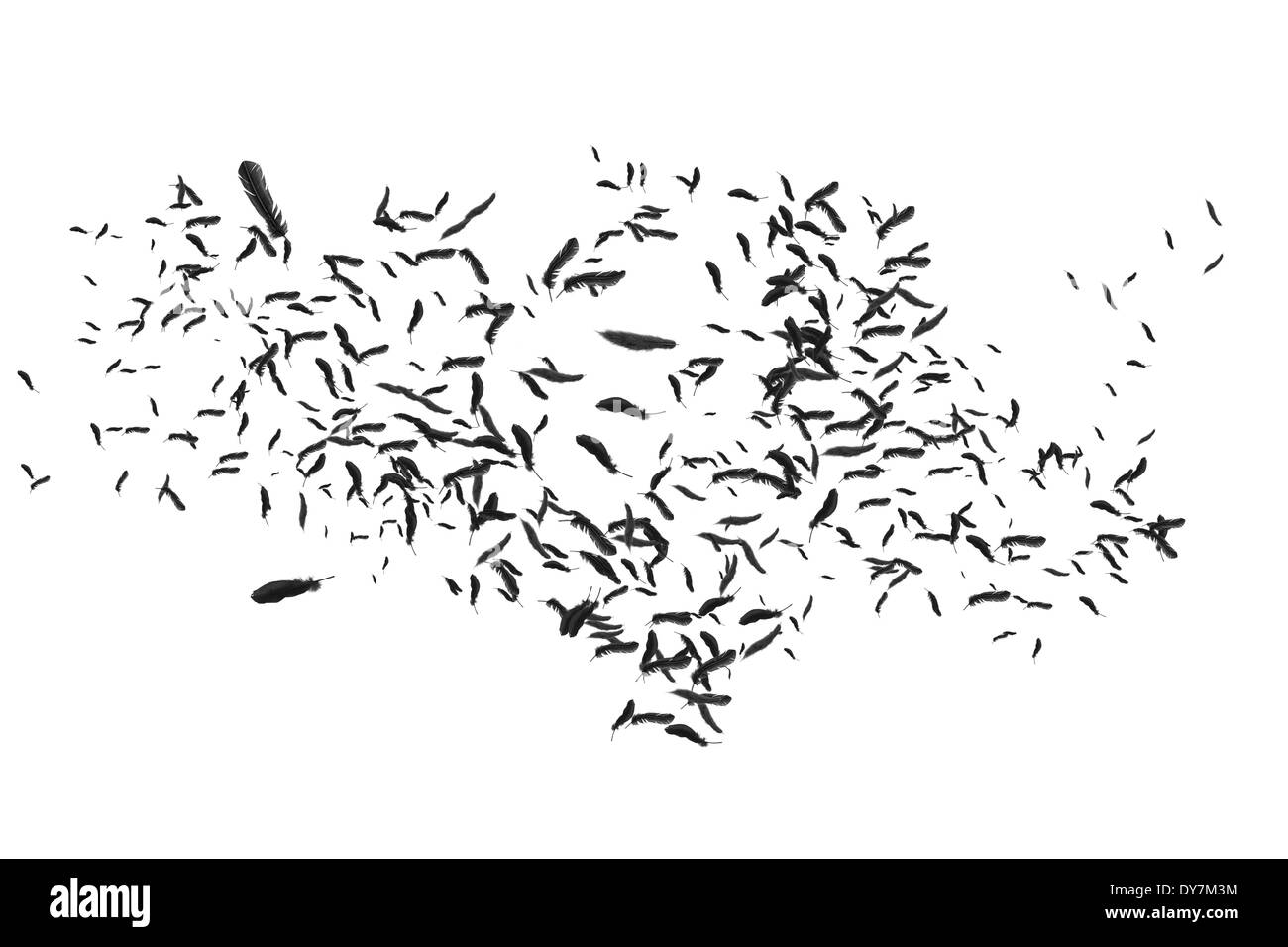 Many feathers blowing in the breeze - Stock Image