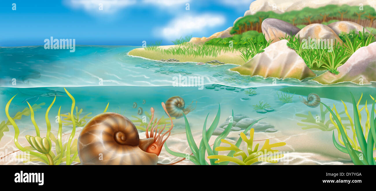 Evolution, drawing - Stock Image