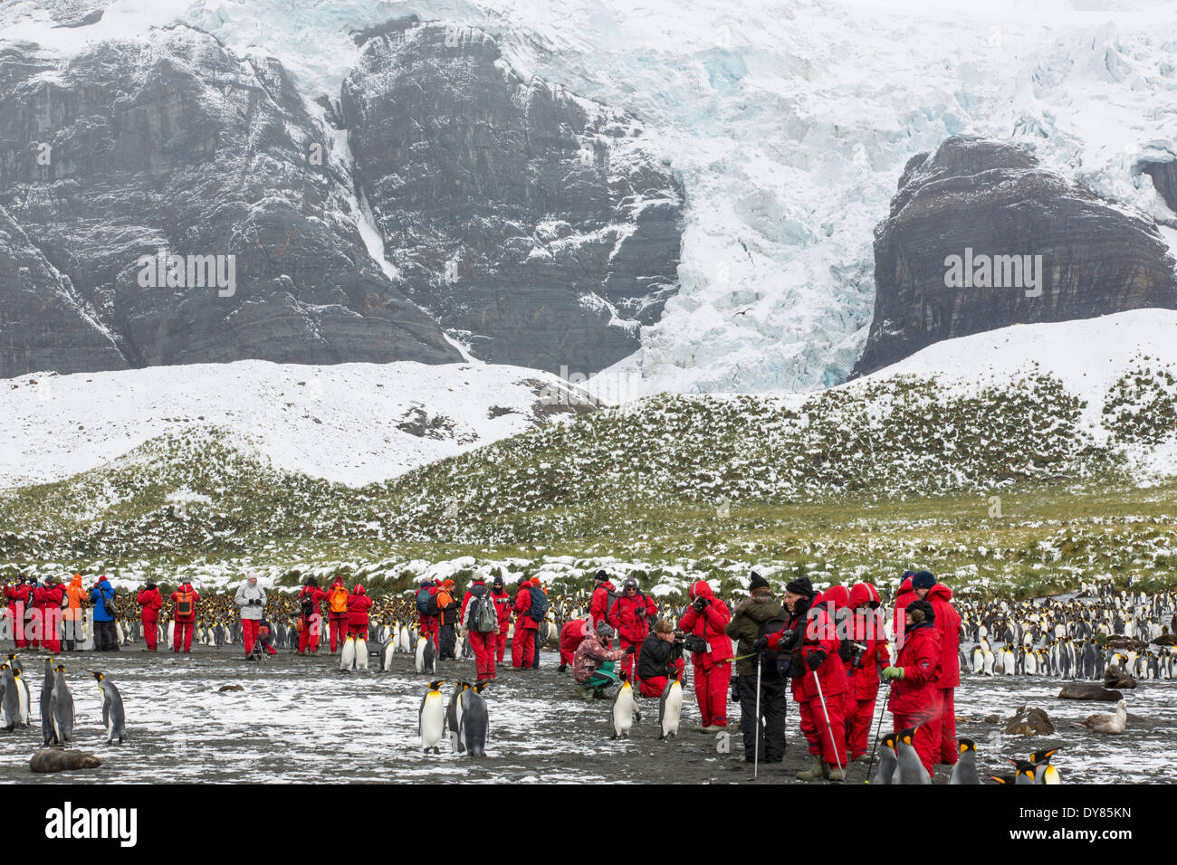 King Penguins at Gold Harbour, South Georgia, with passengers from an expedition cruise and a rapidly retreating glacier - Stock Image
