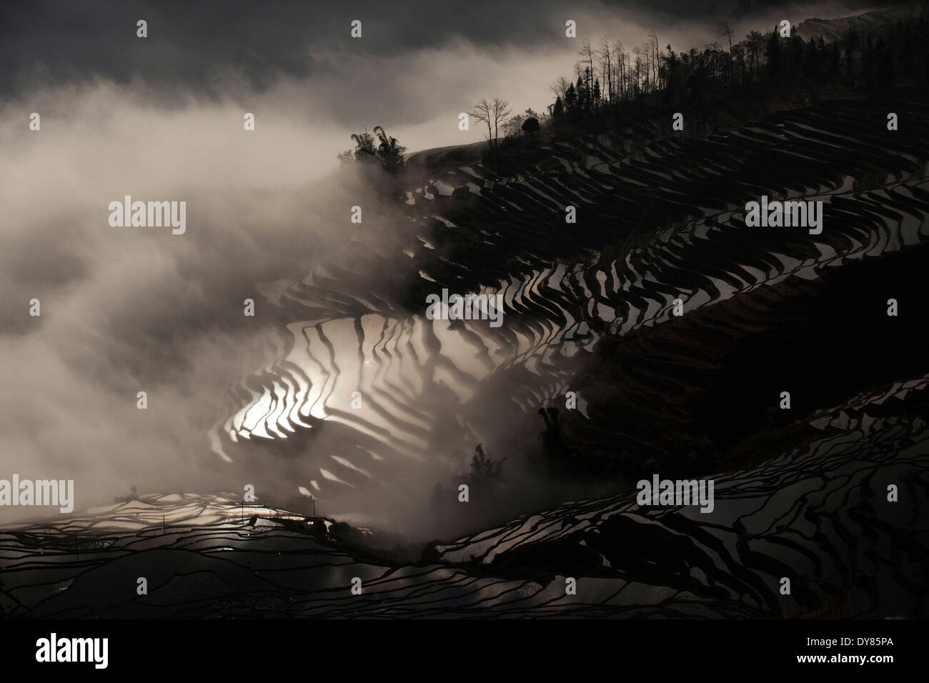 China, Yunnan, Yuanyang, Overcast rice terraces - Stock Image