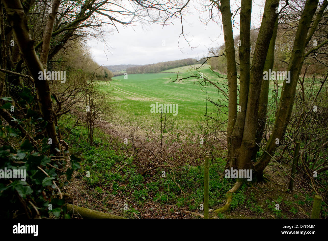Mantle's Wood, near Hyde Heath in Buckinghamshire.  On the proposed HS2 train route through the Chilterns - Stock Image