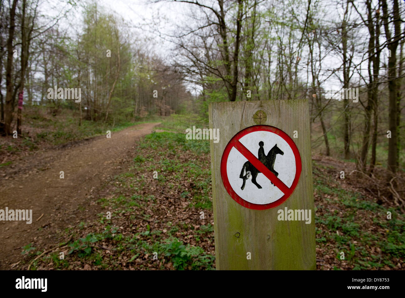 Mantle's Wood, near Hyde Heath in Buckinghamshire.  On the proposed HS2 train route through the Chilterns. - Stock Image