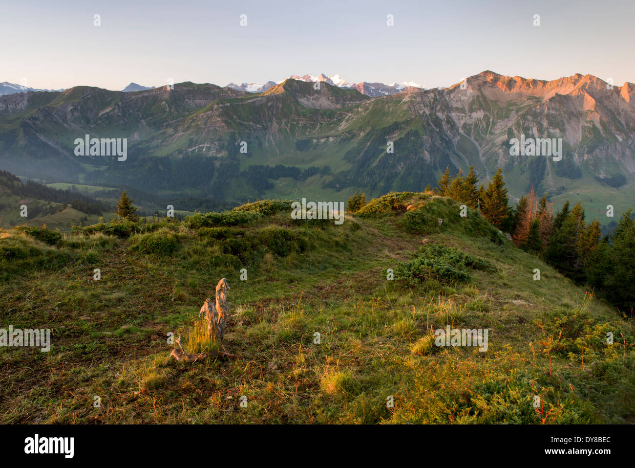 Alps view tree stump mountain Brienzer Rothorn Entlebuch view spruce High Gumme canton Lucerne scenery landscape Stock Photo